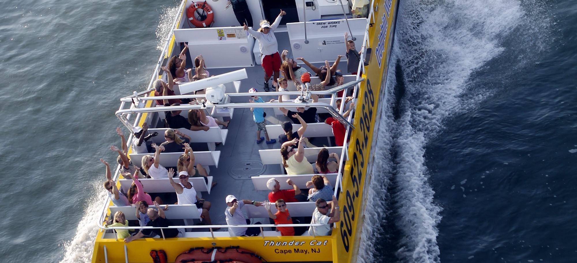 Thunder Cat Dolphin Watch Speedboat Tours Wildwood